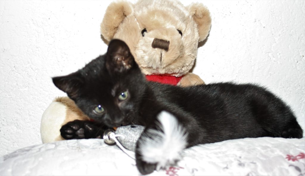 kitten and a teddy bear