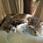 Portia and her kittens