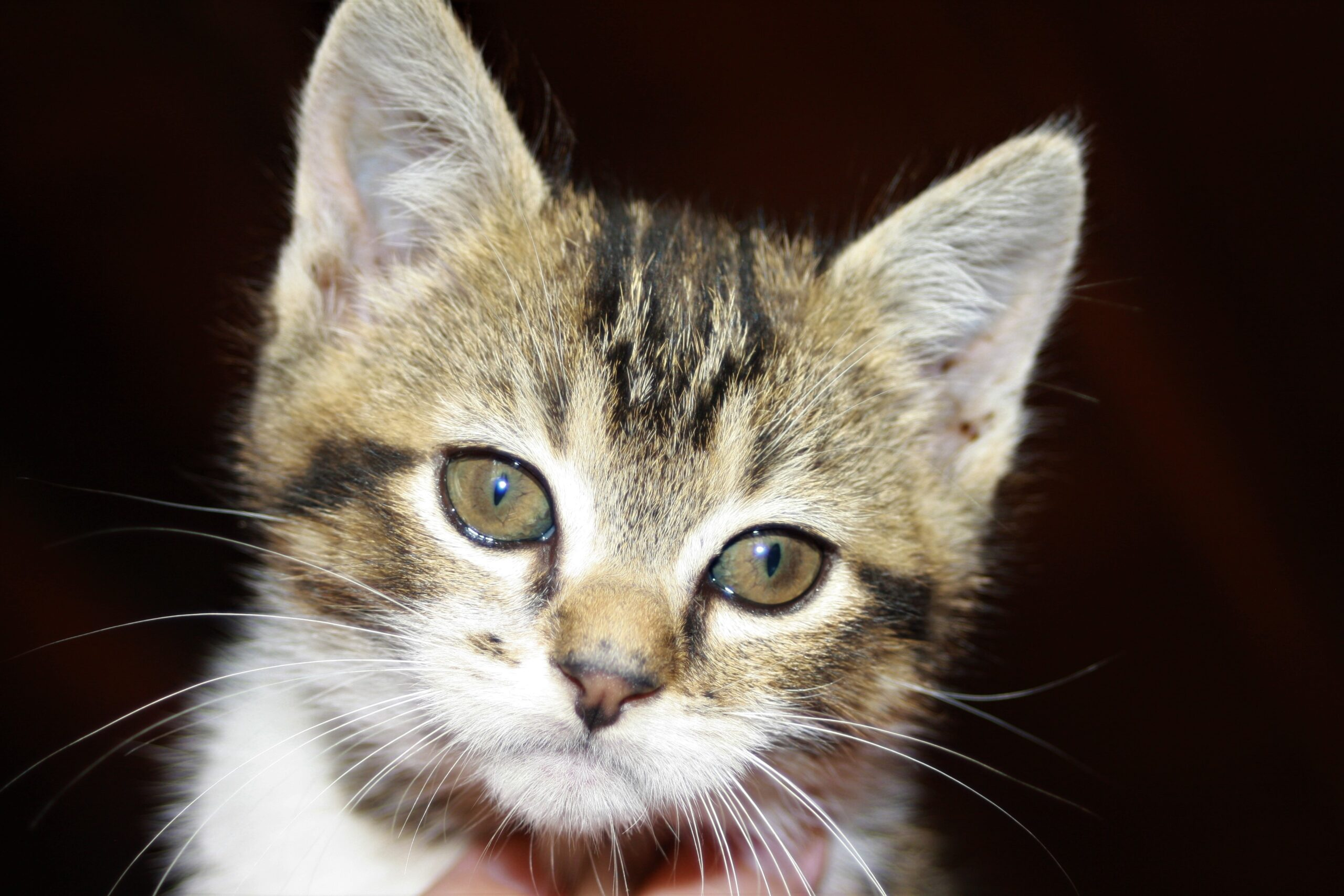 cute little top cat