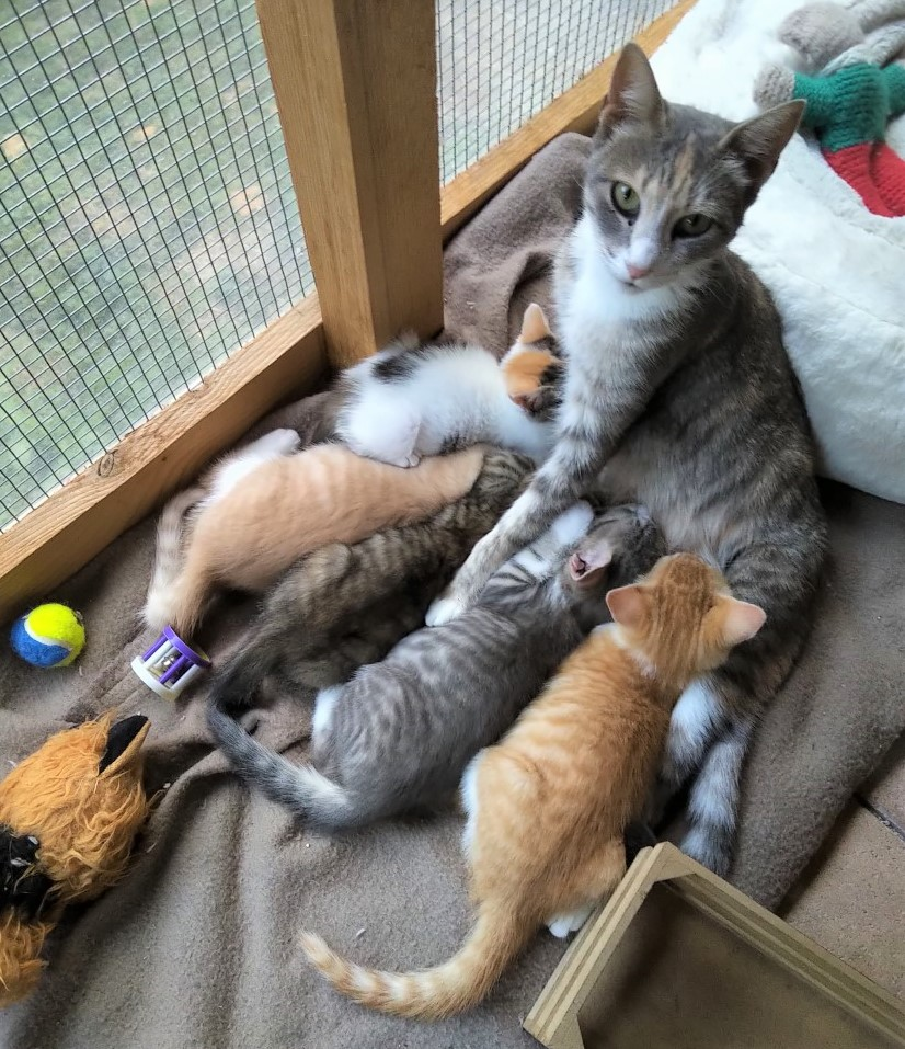 Leila and kittens 2020
