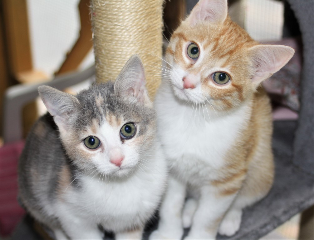 Two kittens cat lover