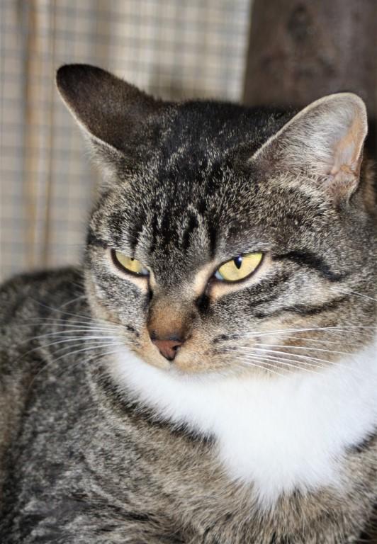 Ophelie chatsdechatillon