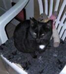 Twiggy, une chatte modèle