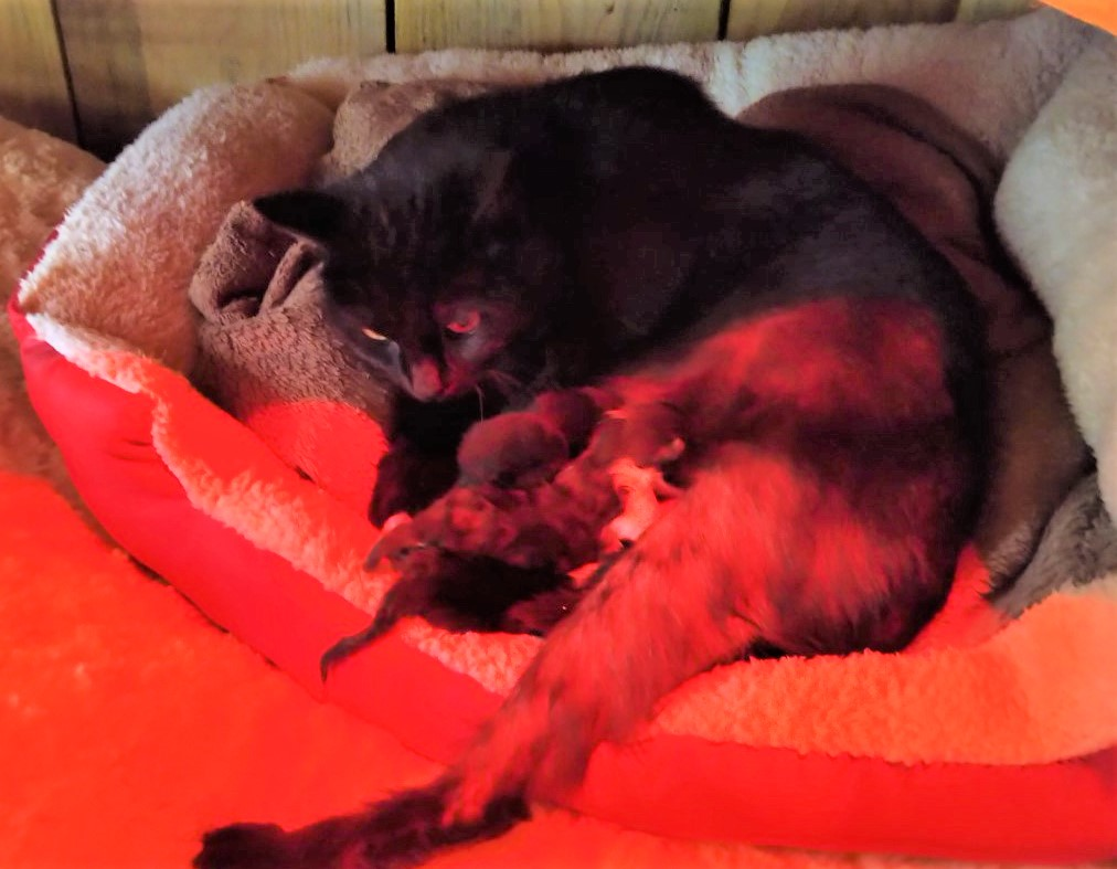 Bluebell and her 5 2 day old kittens