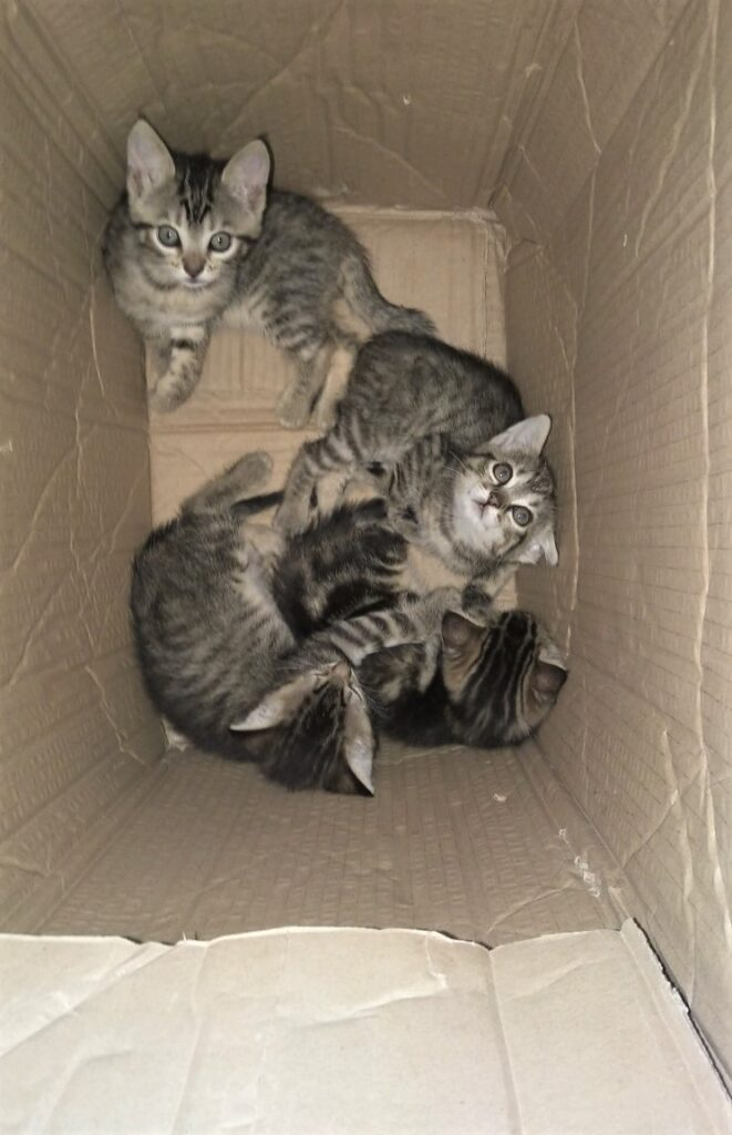 4 kittens abandoned in a cardboard box. Left to die