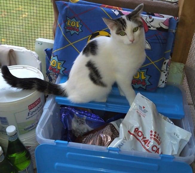 Nuage for adoption Chats de chatillon cat refuge